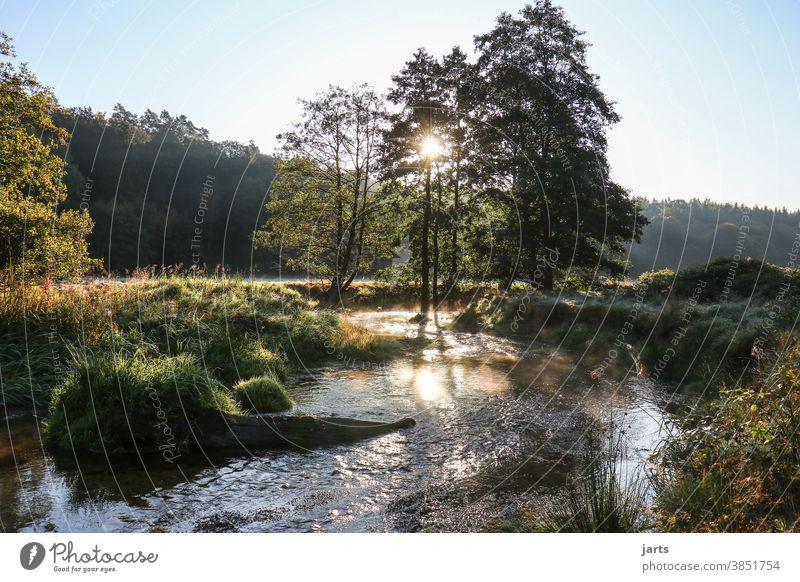 Bachlauf im Sonnenaufgang Landschaft Sonnenaufang Sonnenlicht Bäume Idylle Natur Außenaufnahme Menschenleer Farbfoto Umwelt Schönes Wetter Baum Wasser Tag ruhig