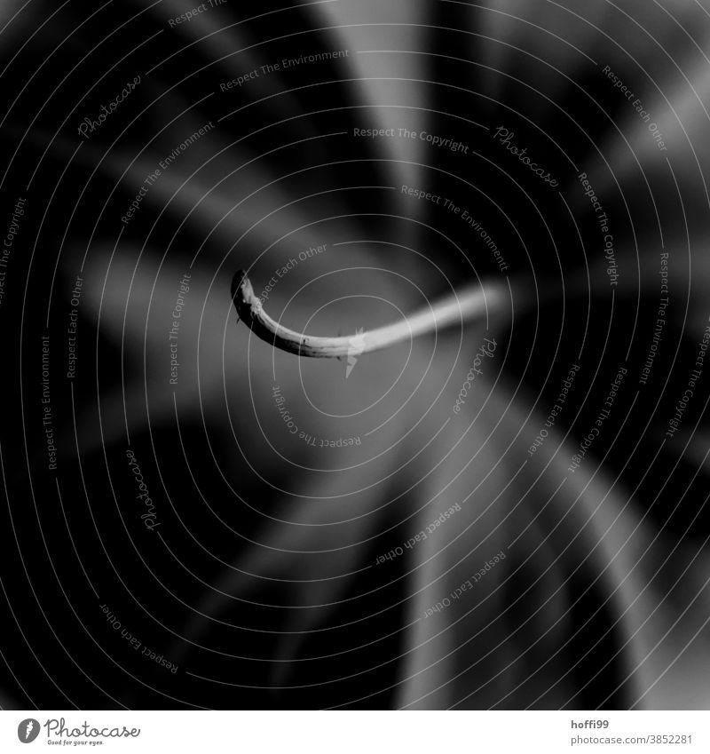 Nahaufnahme einer Physalis Alkekengi - Lampion/Laternenblume physalis alkekengi Vergänglichkeit Lampionblume Schwache Tiefenschärfe Pflanze abstrakt Form