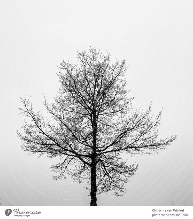 Kahler Baum mit feinen Verästelungen,  gegen den hellen Himmel fotografiert, schwarz-weiß Herbst Winter kahl kahler Baum Äste Zweige Zweige u. Äste