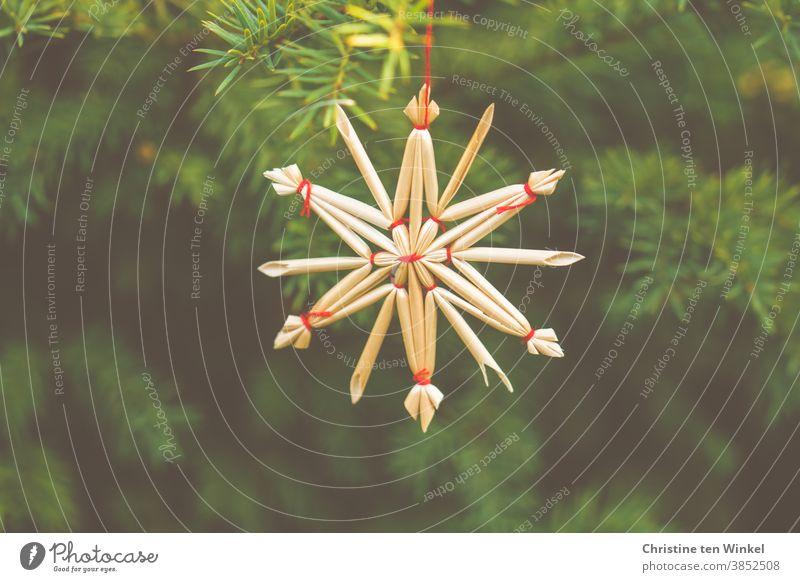 Strohstern am Tannengrün Stern Weihnachtsdekoration Weihnachten & Advent Tannenzweig Eibe basteln Stern (Symbol) Dekoration & Verzierung Weihnachtsstern
