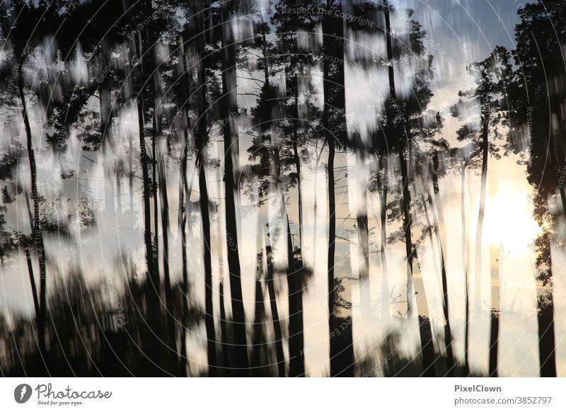 Sonnenuntergang im Wald Baum Natur Landschaft Blatt Herbst Umwelt Farbfoto Pflanze Sonnenlicht Licht Menschenleer Sonnenstrahlen Abstrakt, Doppelbelichtung