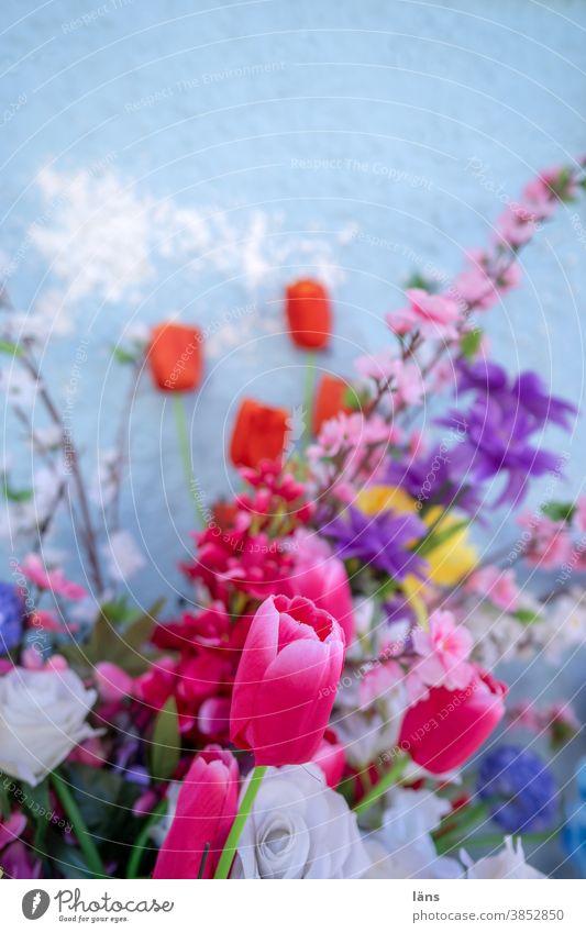 Blumenstrauß Blüte Blühend zusammengehörig Zusammenstellung bunt gemischt Tulpen Rosen blaue wand Dekoration & Verzierung Menschenleer schön Farbfoto rot