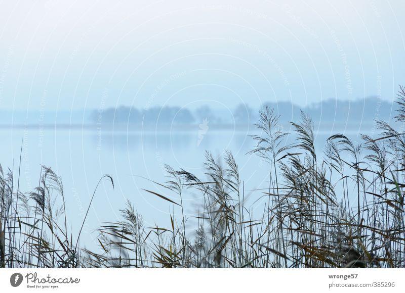 Frühe Natur Landschaft Pflanze Wasser Himmel Horizont Herbst Wetter Nebel Baum Wildpflanze Schilfrohr Riedgras Küste Bucht See Vorpommersche Boddenlandschaft