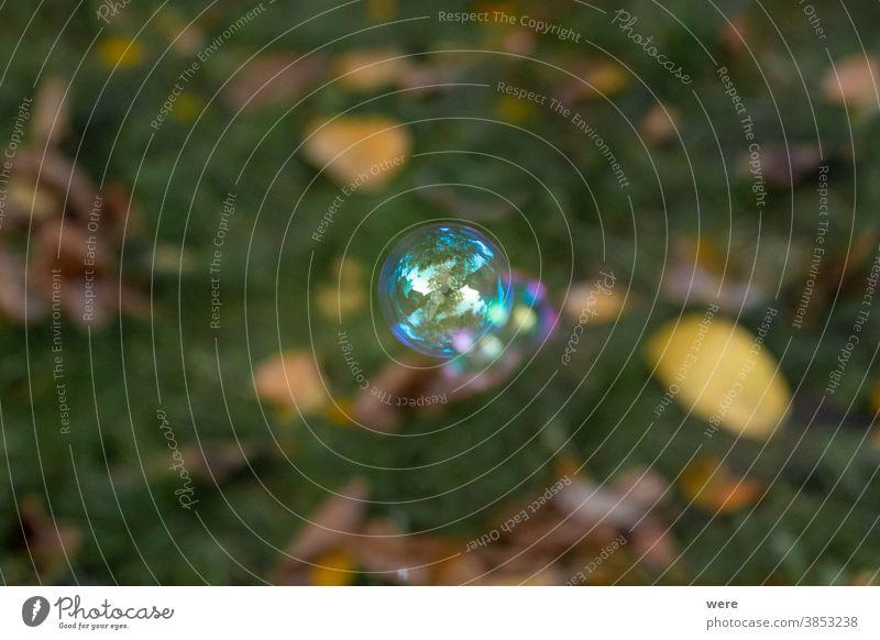 schillernde Seifenblase über einer Wiese Schaumblase Blasen geplatzt Kindheit eadow schäumen zerbrechlich irisierende Seifenblase verderblich spielen Spielen
