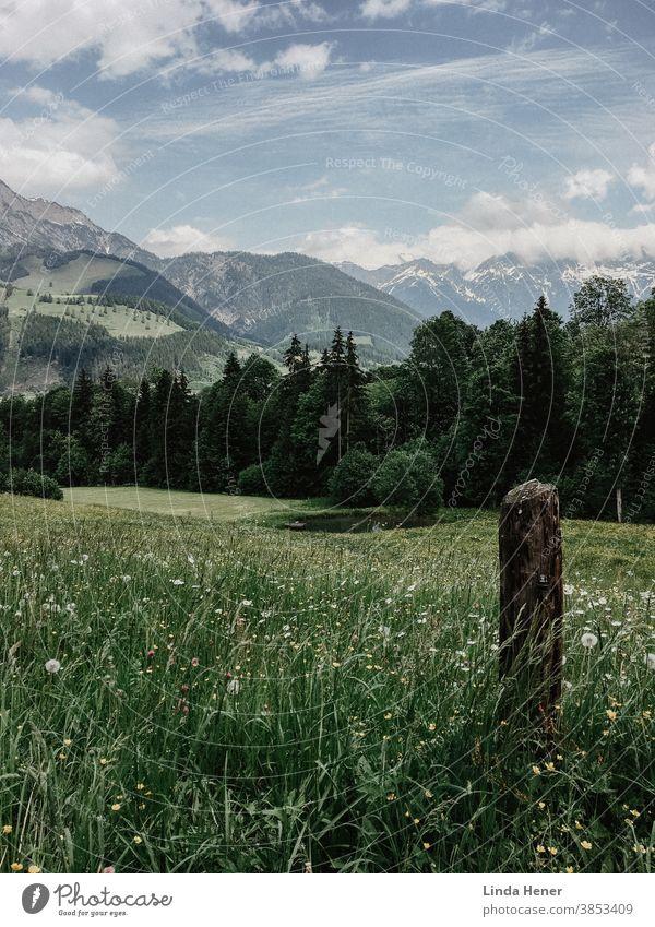 Gebirgspanorama in Österreich Gebirge Wanderung wandern Wiese grün Blumenwiese Kräuter Gras Aussicht Panorama Weite Bäume blauer Himmel Urlaub Urlaubsregion