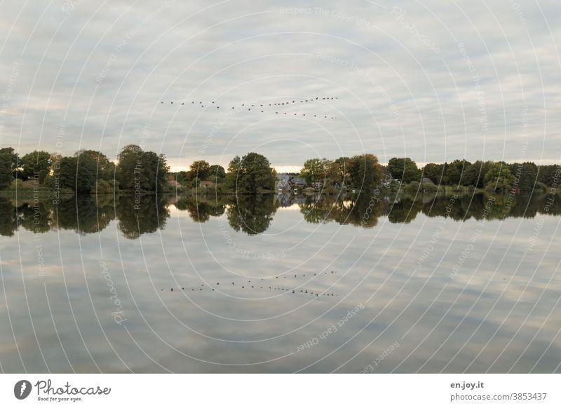 Vogelschwarm am Himmel spiegelt sich im See Seeufer Wolken Spiegelung Ufer Bäume Vogelzug Reflexion & Spiegelung ruhig Landschaft Idylle Wasser Wasseroberfläche