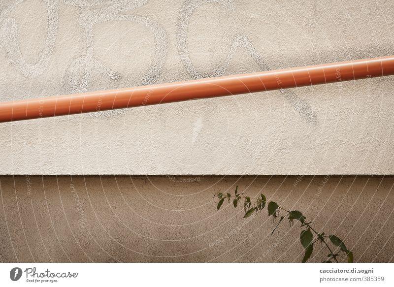 schräg - gerade - gebogen Pflanze Wildpflanze Brennessel Mauer Wand Fassade Röhren Linie einfach lang trist Stadt braun orange bescheiden sparsam Neugier