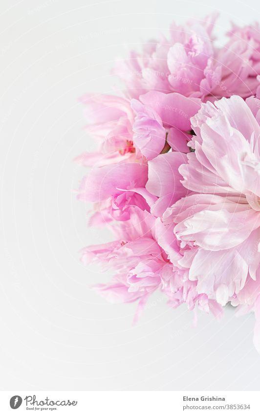 Rosa abstrakter floraler Hintergrund. Pfingstrosenblume in Nahaufnahme. rosa geblümt vertikal verschwommen Tag Geburtstag Postkarte Blumenhändler floristisch