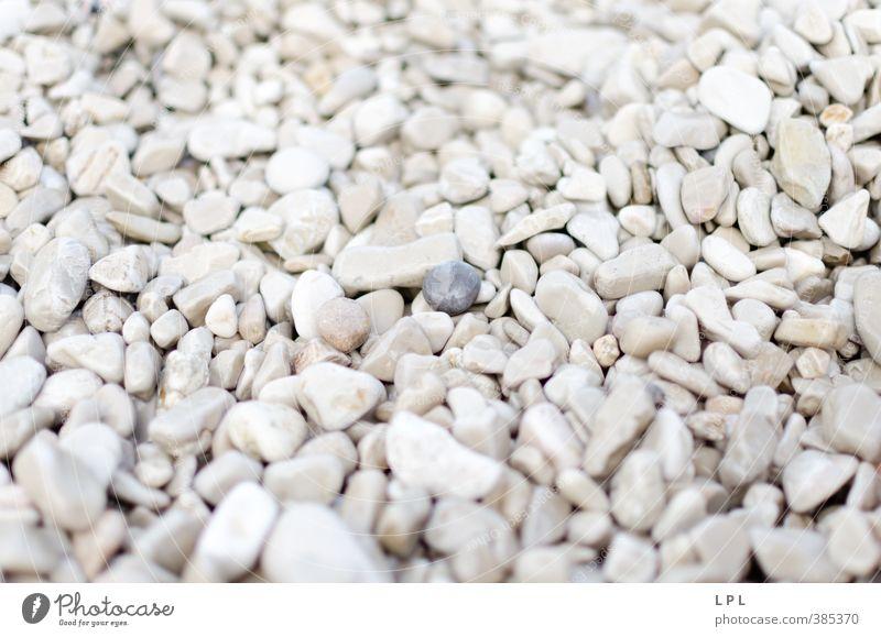 Besucher - dunkler Stein mit hellen Kieselsteinen weiß Umwelt Küste außergewöhnlich Beginn Tourist Kroatien Stein Kies Außerirdischer Besucher Strandgut Sommertag Unschärfe