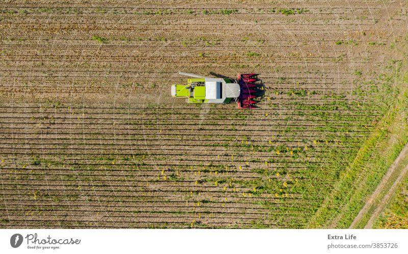 Draufsicht auf Mähdrescher, Erntemaschine, erntereife Sonnenblume oben landwirtschaftlich Ackerbau Agronomie Müsli Land kultiviert Bodenbearbeitung geschnitten
