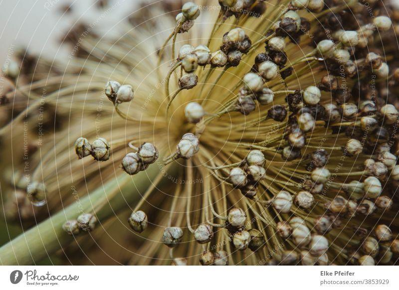 verblüht pflanze detail Herbst herbstlich