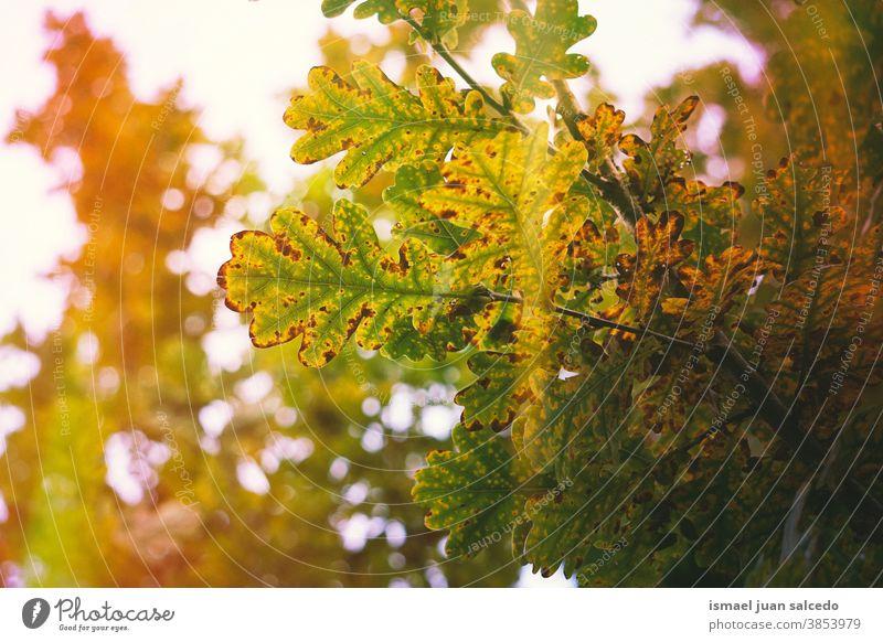 Herbstblätter und Sonnenlicht im Herbst, Herbstfarben Blätter Herbstlaub grün grüne Farbe grüne Blätter braun braune Farbe braune Blätter Licht orange Farbe