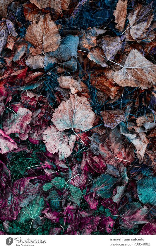 mehrfarbiges Laub auf dem Boden, Herbstblätter und Herbstfarben Blätter Blatt braun orange farbenfroh trocknen Hintergrund Natur natürlich im Freien Textur