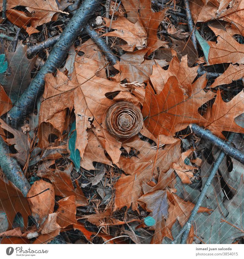 Kiefernzapfen und braune Blätter in der Herbstsaison, Herbstblätter und Herbstfarben Niederlassungen Trockene Blätter trocknen Natur fallende Blätter Herbstlaub