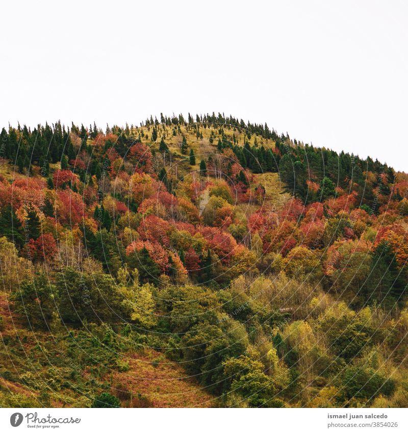 Herbstfarben im Gebirge in der Herbstsaison, Bilbao, Spanien Berge u. Gebirge Bäume Wald Natur Landschaft im Freien Ansicht Hügel reisen Ort Ausflugsziel Ruhe