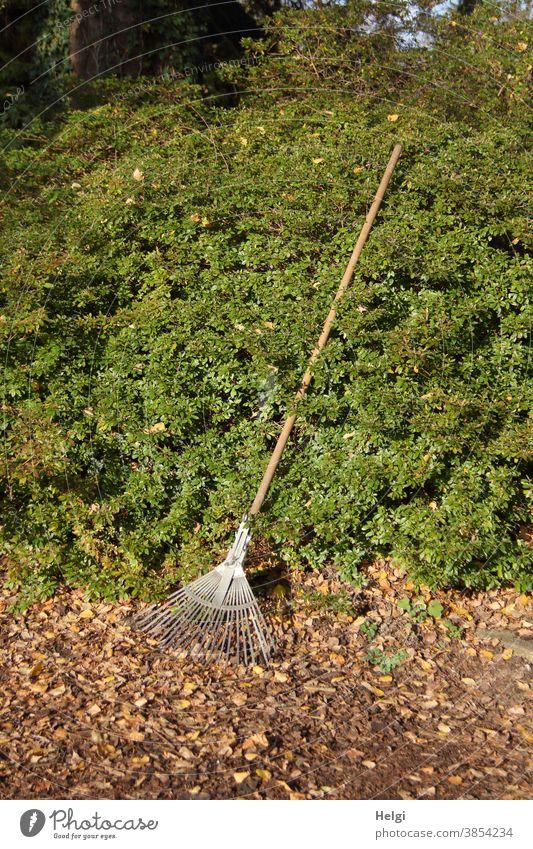 warten auf den Einsatz - Laubrechen lehnt an einer grünen Hecke, bereit, um das Laub auf dem Boden wegzuharken Harke Rechen Laubharke Laubbesen Herbst Blätter