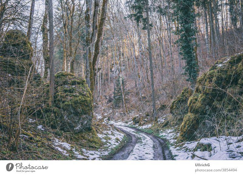 Waldweg mit Schneeresten im Frühling. Weg unbefestigter Weg Hohlweg Fahrspur Landschaft Natur Baum Wälder verschneite restliche Überreste Saison Winter