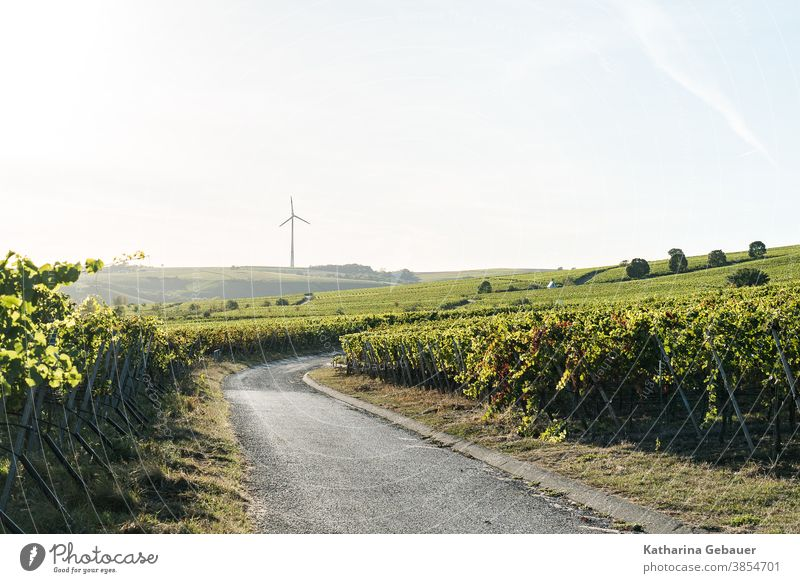 Erneuerbare Energien Handschuh in den Weinbergen Windrad Natur Berge Sommer Weg wein Landschaft