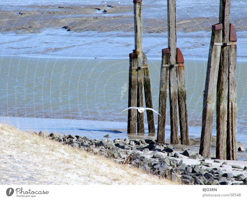 Meer sehn #15 - Einheit See Gezeiten Möwe Vogel Tier Deich Strand Wellen Gras Holz Wasser Hafen Stranddüne Wattenmeer einheitlich Freiheit Stein Sand alt