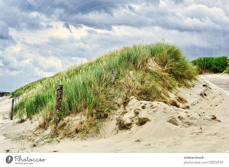 Sanddüne mit Strandgras und bedecktem Himmel Düne Strandhafer Dünengras Gras Natur Landschaft Pflanzenwelt Hügel grün wolkig malerisch ruhige Umgebung