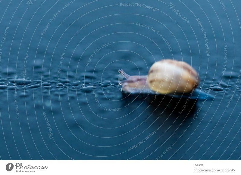 Baby-Schnecke mit Schneckenhaus kriecht auf nasser Oberfläche, schwache Schärfentiefe Weinbergschnecke klein winzig Makro Wassertropfen Natur Tier Farbfoto