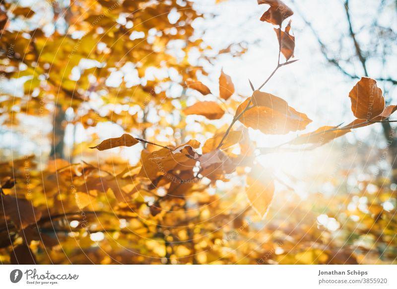 orange gefärbte Herbstzweige November Herbsthintergrund Herbstfarben Herbstwald Herbstlandschaft Herbstlaub Herbstliche Bäume hintergrundbeleuchtet