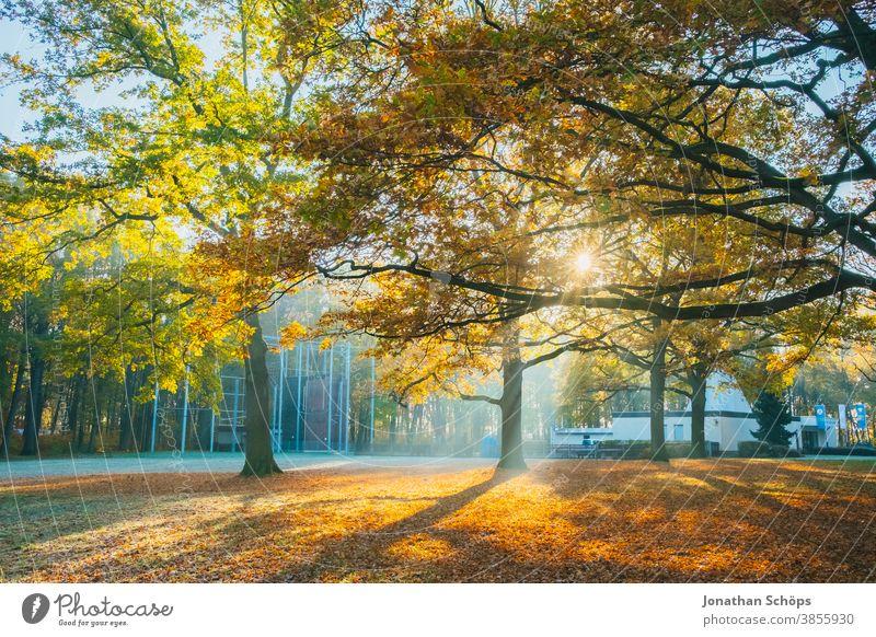 Schöne Bäume auf einer Waldwiese mit Sonne und Frost Chemnitz Deutschland Kosmonautenzentrum Sigmund Jähn Küchwald November Herbsthintergrund Herbstfarben