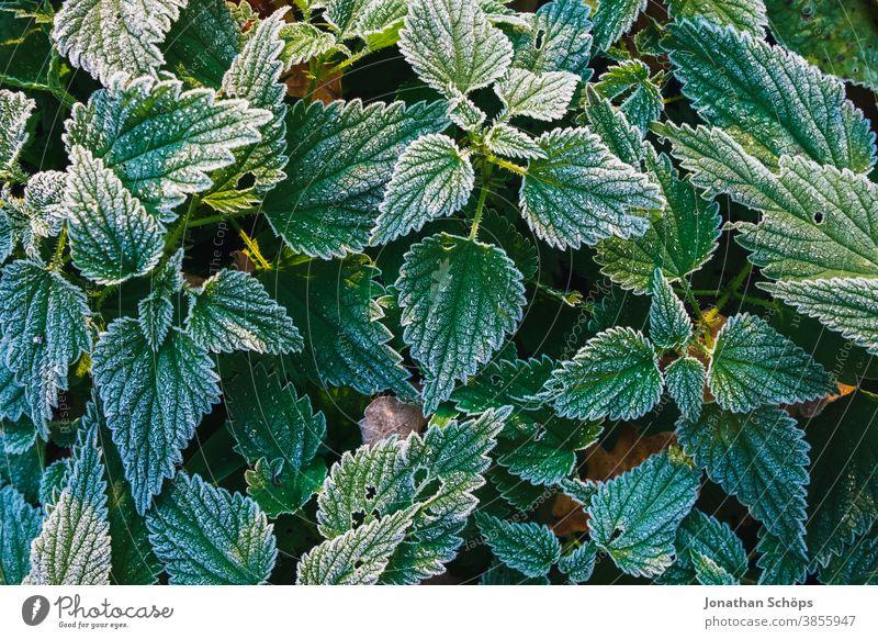 Nesselfrostblätter Nahaufnahme-Textur November Herbsthintergrund Herbstwald Herbstlandschaft Herbstlaub Herbstliche Bäume abschließen kalt Laub Wald Frost grün