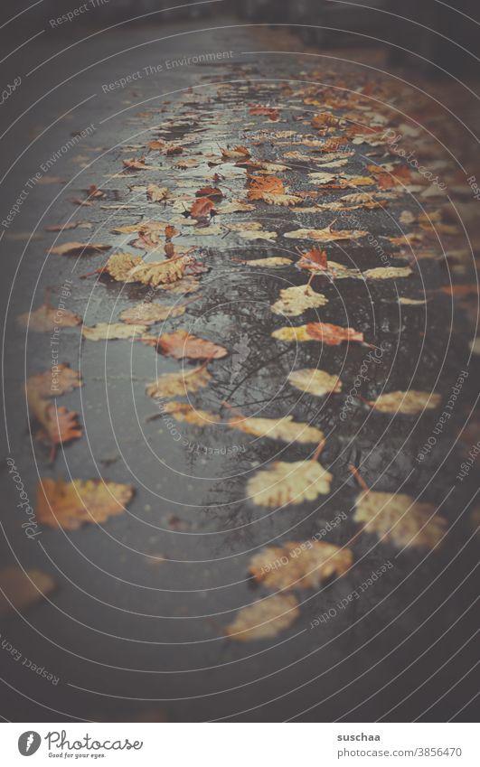 verregnete straße mit herbstlaub Herbst Winter Straße kalt Laub Herbstlaub Regen nass Wasser Blatt herbstlich Vergänglichkeit Herbstbeginn Jahreszeiten