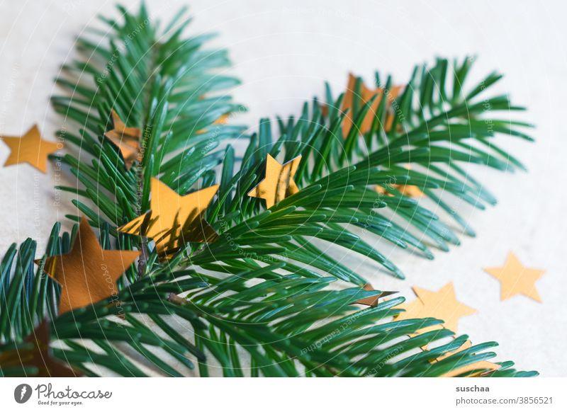 tannenzweig mit sternchen Tanne Tannenzweig Tannennadeln Tannenbaum Duft Weihnachten & Advent Dekoration & Verzierung Weihnachtsbaum Winter grün Tradition
