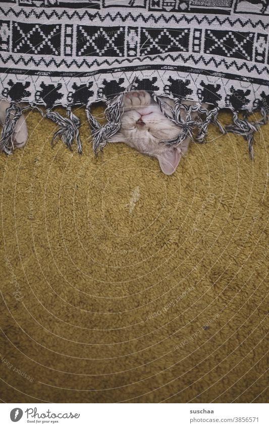 andere katze schläft auch Katze Kater Katzenkind schlafen ausruhen Versteck Tier Haustier niedlich kuschlig Teppich Decke versteckt Hauskatze Tierjunges Pfote