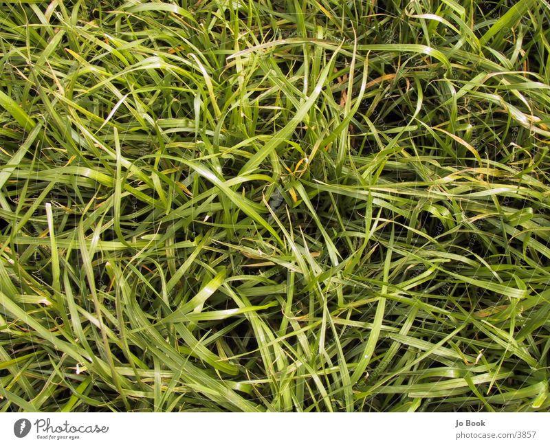 Graaaaaaaas grün Wiese Gras