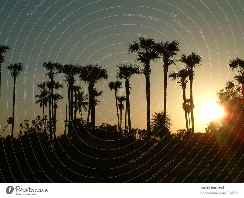 Indienpanorama Natur Baum ruhig Wärme Erfolg Physik Indien