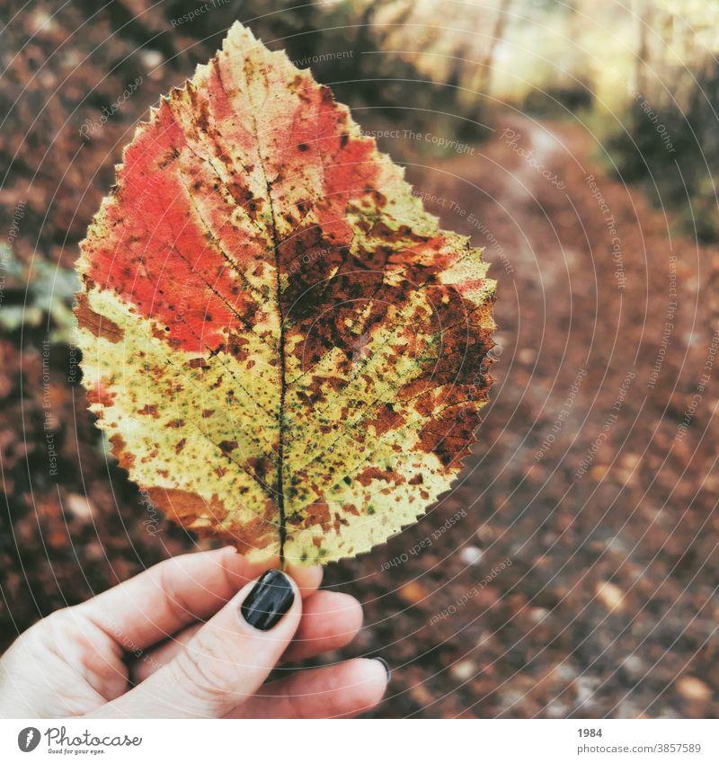Blatt im Wald Herbst Licht Außenaufnahme Farbfoto Umwelt Natur