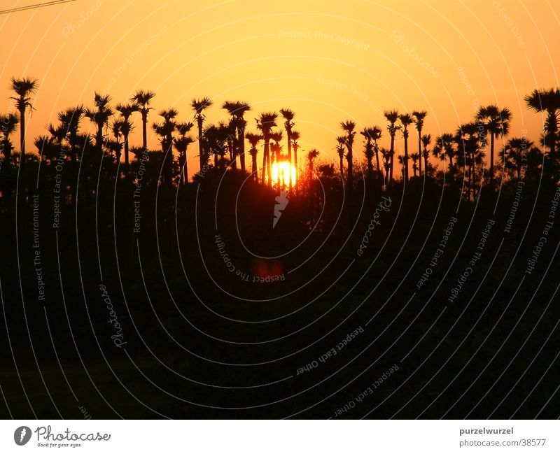 Sonnenaufgang Indien ruhig Physik Baum Stimmung Wärme