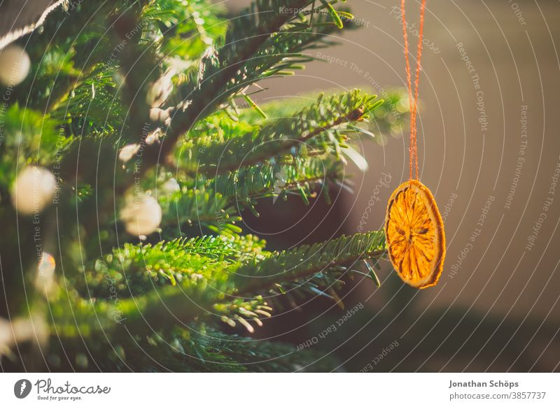 getrocknete Orange am Weihnachtsbaum hängend Weihnachten Tanne heimwärts x-mas Lichterkette Weihnachtsdekoration Weihnachtsorange Wohnzimmer Baum Wand
