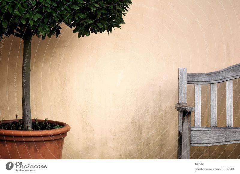 Mußestundenplätzchen Natur alt Pflanze Baum Erholung ruhig Umwelt Holz Stein Stil Garten Park Freizeit & Hobby Idylle sitzen Wachstum