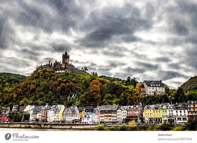 reichsburg herbstlich Jahreszeiten Herbst Regen Hunsrück Moseltal Mosel (Weinbaugebiet) Flussufer Rheinland-Pfalz Ruhe Idylle Weinstock Weinberg Abenteuer