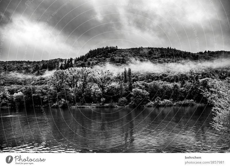 stille Weinberg Jahreszeiten herbstlich Herbst Regen Hunsrück Ruhe Moseltal Mosel (Weinbaugebiet) Flussufer Rheinland-Pfalz Idylle Ausflug Außenaufnahme