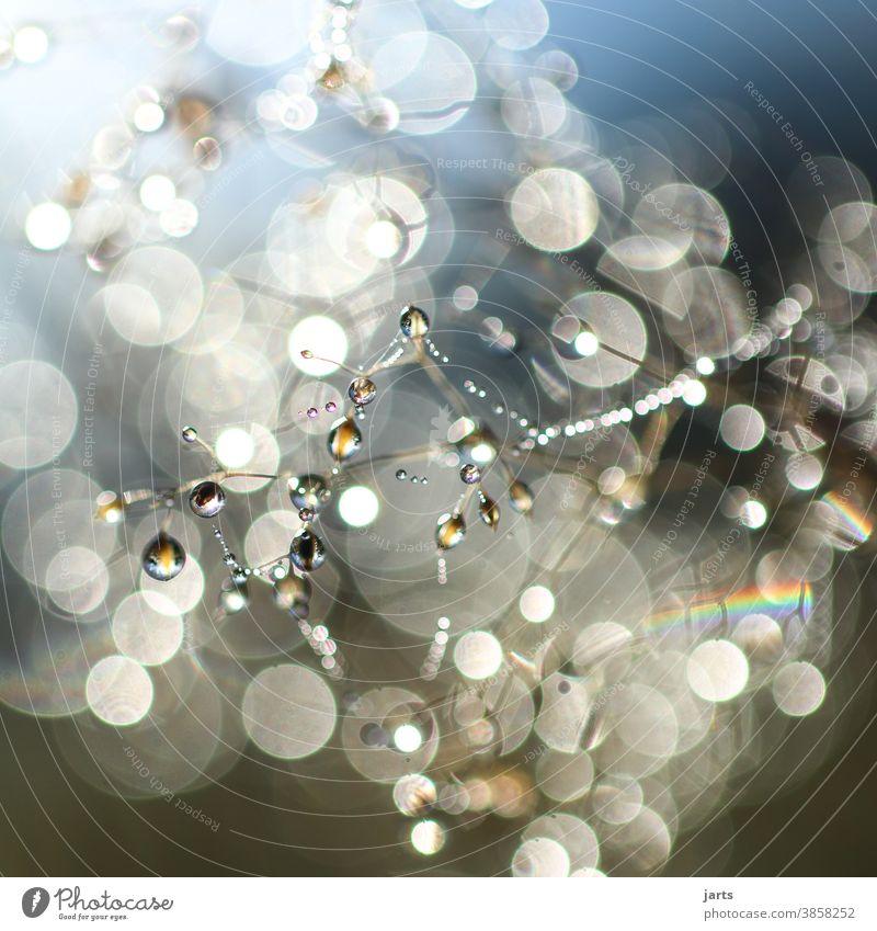 Tautropfen bei Sonnenaufgang Tropfen Morgen Herbst Starke Tiefenschärfe Lichterscheinung Reflexion & Spiegelung Regenbogen Außenaufnahme Farbfoto Natur