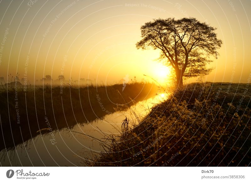 Sonnenaufgang, Wiese, Baum und Bach Weide Graben Nebel Nebelschleier Morgen Morgendämmerung Morgenlicht Sonnenlicht Sonnenaufgang - Morgendämmerung