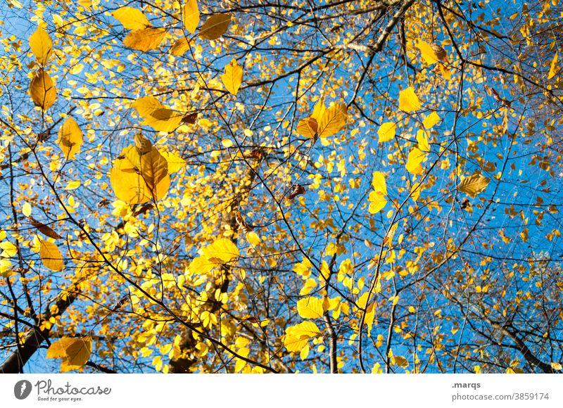 Ein Samstag im Herbst Blatt gelb Wolkenloser Himmel Schönes Wetter Ast Vergänglichkeit Natur viele unten leuchtende Farben Herbstgefühle Laub Laubbaum Stimmung