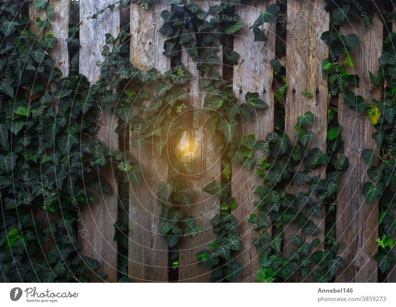 Garten-Waldzaun mit leuchtender Lampe an der Wand mit Kletterpflanze im abendlichen Hintergrund Zaun Natur grün Pflanze Blatt Klettern Wein Wachstum Aufsteiger