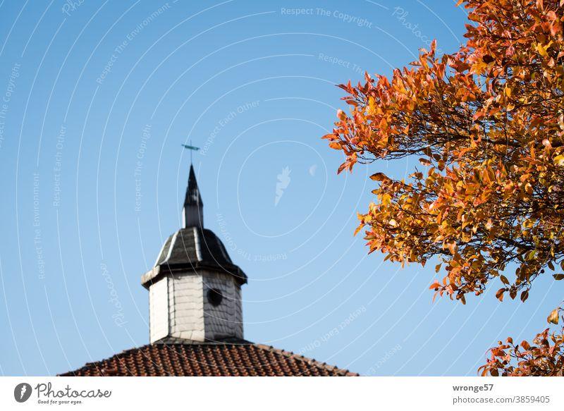 Letzte bunte Blätter klammern sich an ihrem Baum fest und trotzen dem fortschreitenden Herbst - noch buntes Laub bunte Jahreszeit festklammern herbstlich