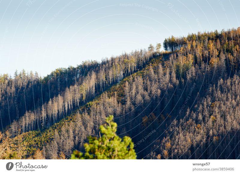 Blick auf einen Hang im Ilsetal mit Streifen absterbender Fichten und Streifen mit bereits aufgeforsteten Waldes Landschaft Harz abgestorben Borkenkäfer Plage