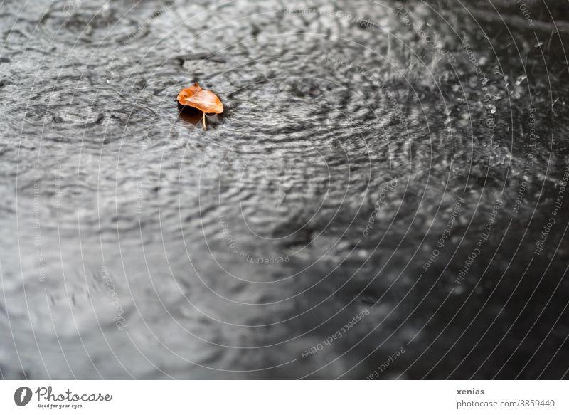 ein Herbstblatt liegt im Regen Blatt Tropfen Natur Wetter Klima Regentropfen Kreise nass Jahreszeiten xenias