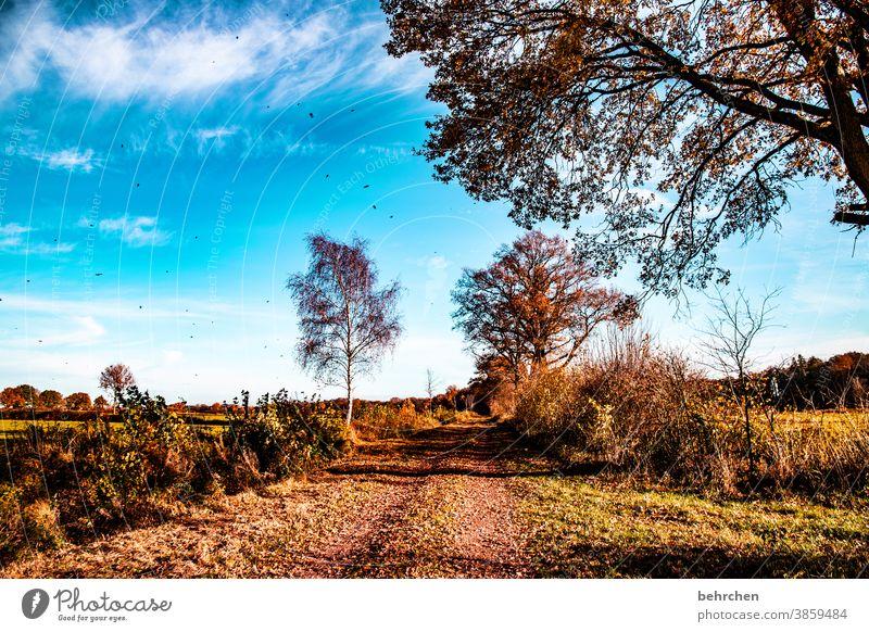 wenn die blätter fallen Idylle Blauer Himmel herbstspaziergang Herbstfärbung herbstlich Herbststimmung Jahreszeiten Herbstlaub ruhig Schönes Wetter Wege & Pfade