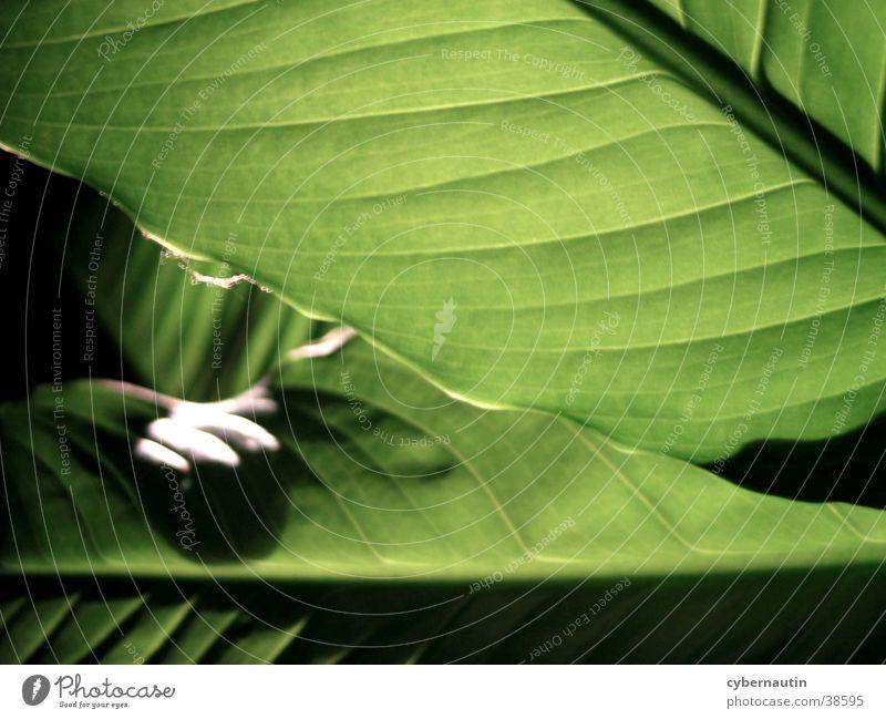 Blattbefall grün Blattunterseite