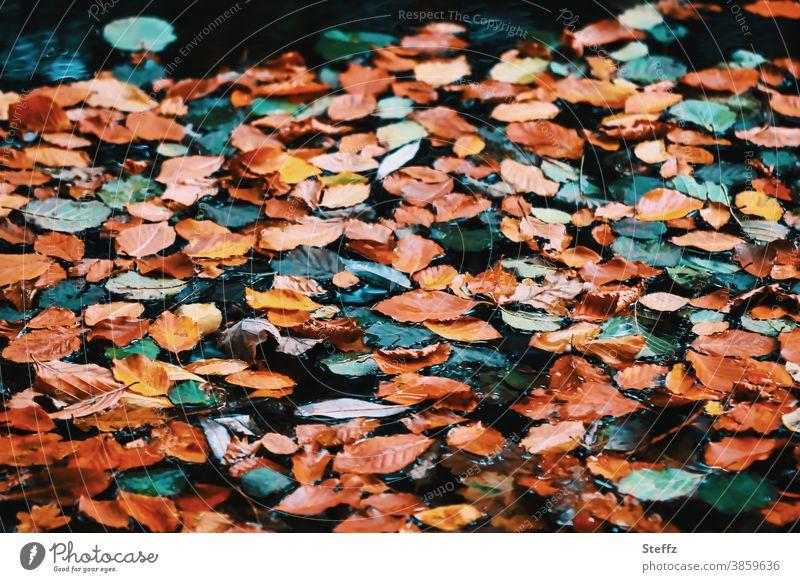 Novemberblätter überall Herbstlaub Novemberbild Novemberstimmung heimisch Herbstblätter Stille Herbstwetter Herbsttag herbstlich Vergänglichkeit Herbstfärbung