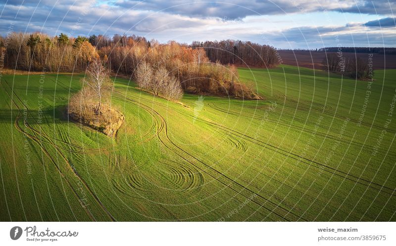 Schöne grüne Wiese. Wintergetreide und blauer, bewölkter Herbsthimmel Feld Ackerbau Natur Ernte im Freien Land Gras Pflanze fallen November Hintergrund